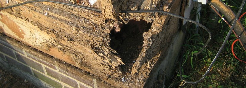 What Are Some Of The Best Termite Protection Options Abolish Termite And Pest Management