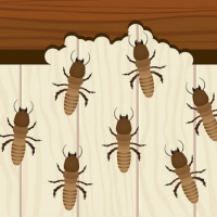 Stop termites in their tracks before they get in your home